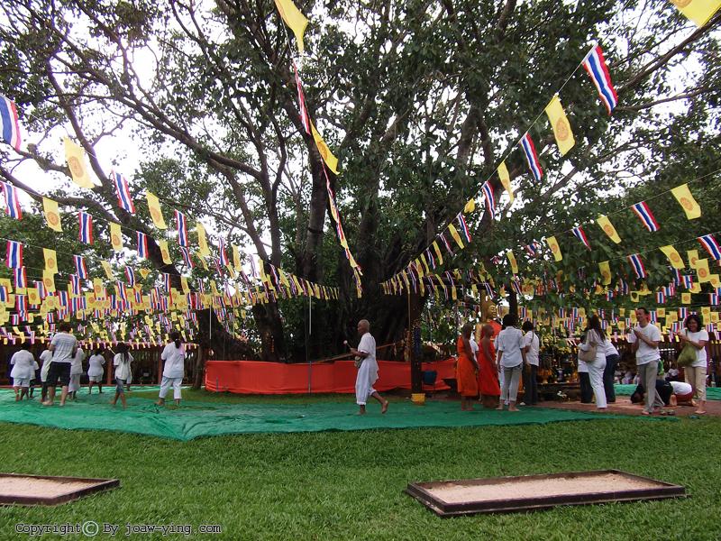 ปราจีนบุรี ต้นโพธิ์ศรีมหาโพธิ์